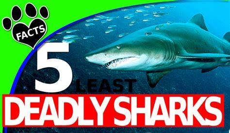 deadly shark species shark week