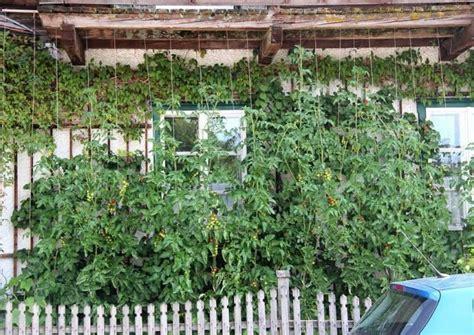 Rankpflanzen Als Grüner Sichtschutz