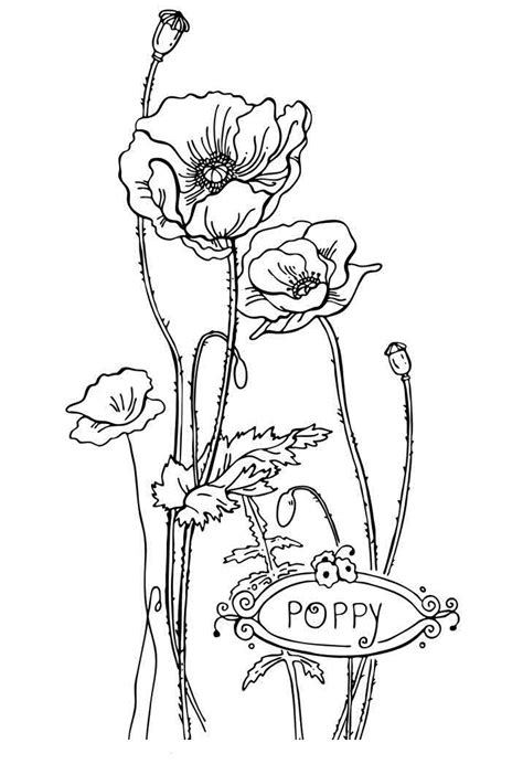 printable flower coloring pages  kids