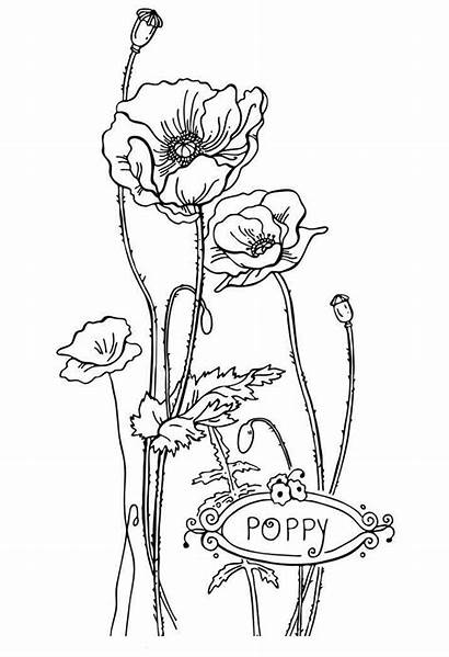 Coloring Pages Flower Printable Poppy Flowers Sheets