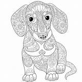 Coloring Pages Dachshund Printable Dog Adult Adults Colorings Getcolorings sketch template