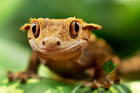 Exotic Reptiles For Sale Online Different Types Of Pet