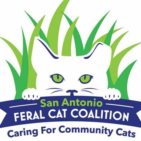 automatic cat feeder petco cat coalition 2018 cats