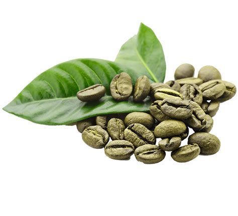 Are you searching for coffee bean png images or vector? Arens Coffee