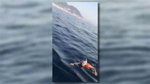 Dolphin rescued by local boat owner - 09.08.17 - YouTube