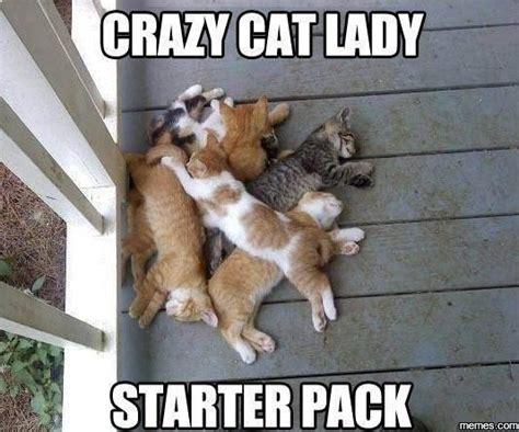 Weird Cat Meme - crazy cat lady memes com