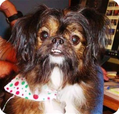 maggie adopted dog ae brattleboro vt