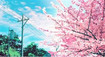 Giphy Cherry Blossom Sakura Tweet Gifs