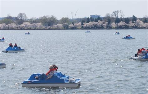 Tidal Basin Paddle Boats by Cherry Blossoms
