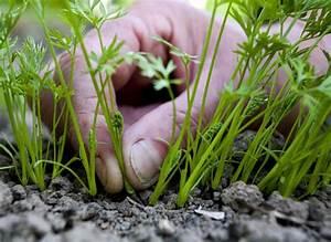 Quand Planter Courgette : les 57 meilleures images du tableau l gumes planter sur ~ Dallasstarsshop.com Idées de Décoration