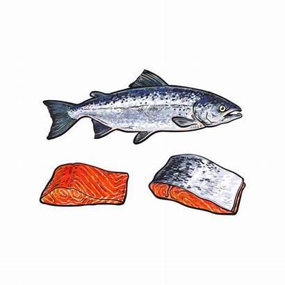 Fillet Salmon Clip Fish Illustrations Similar