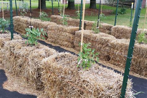 straw bale gardening fertilizer straw bale garden organic fertilizer garden ftempo