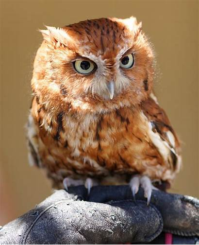 Cute Princess Owls Gorgeous Pm Posted