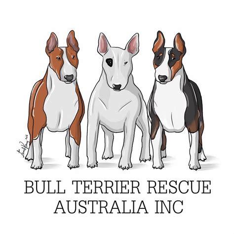 bull terrier rescue australia  homing  adoption