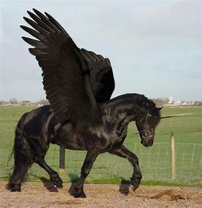 Unicorn Foolery