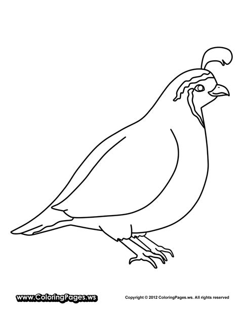 Quail Coloring Page Quail Coloring Pages For Preschool Preschool And