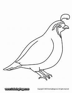 animals-Quail-printable-coloring-pages-for-kids ...