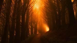 Wallpaper, Trees, Light, Orange, Forest, Sunset, 4k, Nature