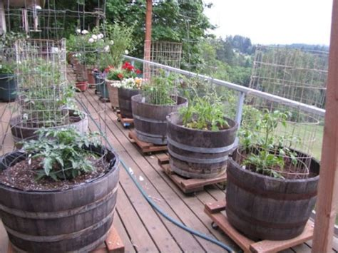 container vegetable garden 24 interesting container vegetable gardening ideas for