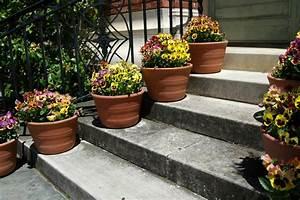 Blumen Für Sonnigen Standort : standort f r stiefm tterchen wo gedeihen sie am besten ~ Michelbontemps.com Haus und Dekorationen