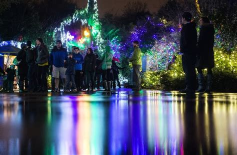zoo lights seattle 8 great places to view lights around puget sound
