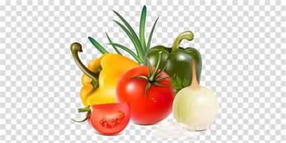 Vegetables Clipart Cartoon Tomato Illustration Transparent Vegetable