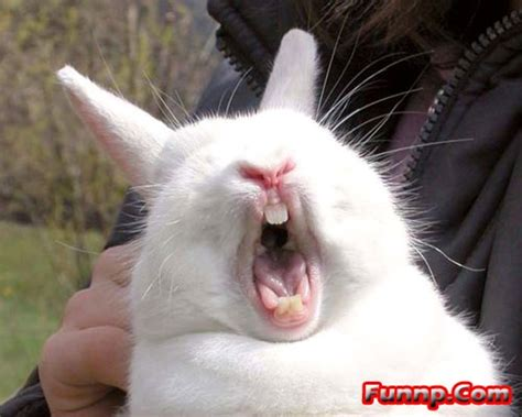 cute funny bunny pictures captions rabbit