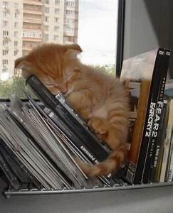 cute tired cat - Kittens Photo (22309833) - Fanpop