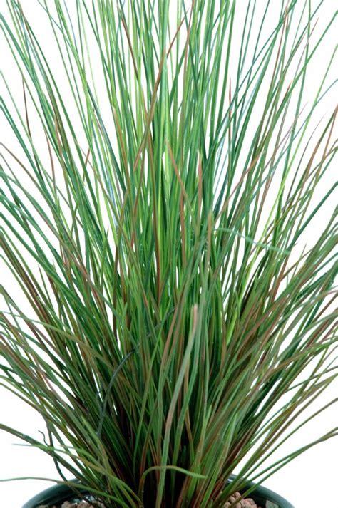 Plante Exterieur En Pot Plante Artificielle Gramin 233 E Touffe En Pot Int 233 Rieur Ext 233 Rieur H 75 Cm