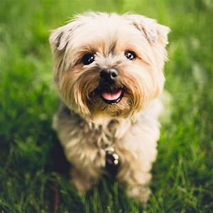 100 Cute Dog Names For Girl And Boy Dogs