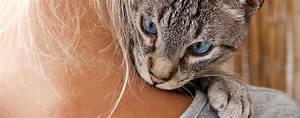 Katze Kotzt Viel : wenn die katze zu viel n he braucht katzen magazin ~ Frokenaadalensverden.com Haus und Dekorationen