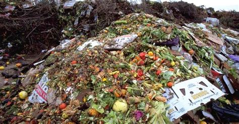 seattles  composting law  big business  cedar
