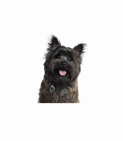 Hills Prescription Diet Canine Wd Perros Dietas