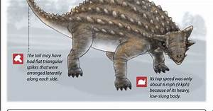 Ankylosaurus Facts About The Armored Lizard Fossils