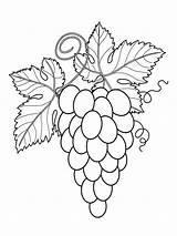 Coloring Grapes Grape Fruits Printable sketch template