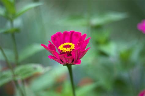 picture yellow flower nectar pinkish flower