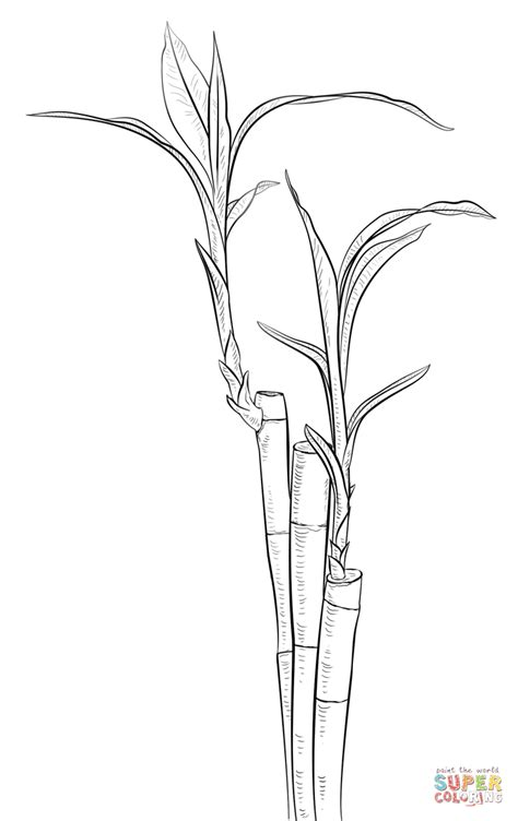 bamboo coloring page coloring home