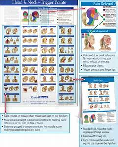 Trigger Point Referred Chart Trigger Point Charts 5 Chart Set Kent Health Systems