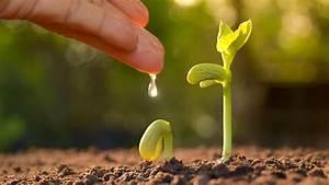 Wann Tomaten Pflanzen : tomaten und kartoffeln sollten sie nicht nebeneinander pflanzen ~ Frokenaadalensverden.com Haus und Dekorationen