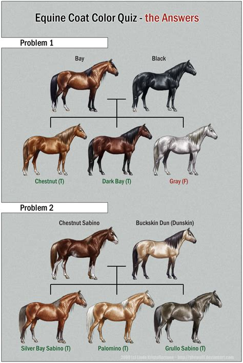 coat equine quiz colors answers deviantart horse chart 2009