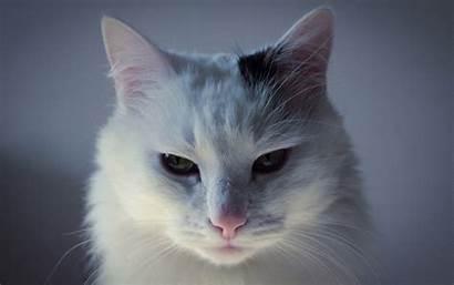 Cat Cats Desktop Wallpapers 1080p Spot Background