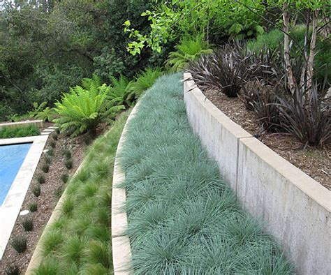 plants for modern landscaping 5 modern landscaping essentials for a stylish yard