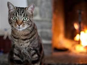 cats for me cat adoption checklist petfinder