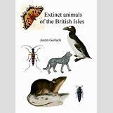Images Of Land Animals   893 x 1249 jpeg 130kB