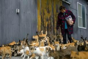 cat island japan s aoshima island cats outnumber humans six to one