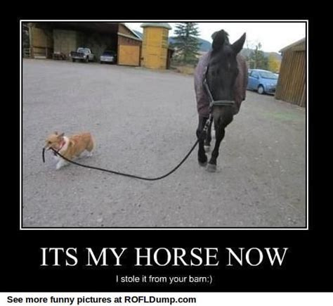 Horse Memes - 222 best images about horses on pinterest dressage funny horses and ponies