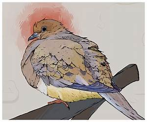 Mourning Dove by Heretic-Artwork on DeviantArt