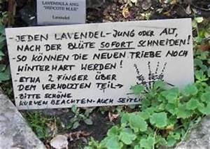 Lavendel Schneiden Im Herbst : schopflavendel schneiden schopflavendel lavandula ~ Lizthompson.info Haus und Dekorationen