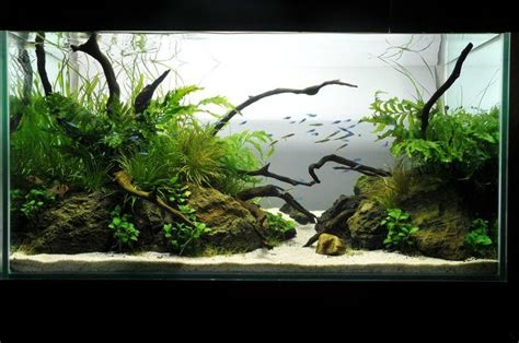 Aquascaping Forum - aquascaping categories my own take on it aquascaping