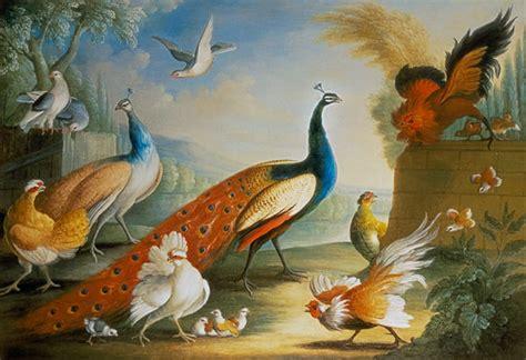 peacocks doves chickens   roos marmaduke